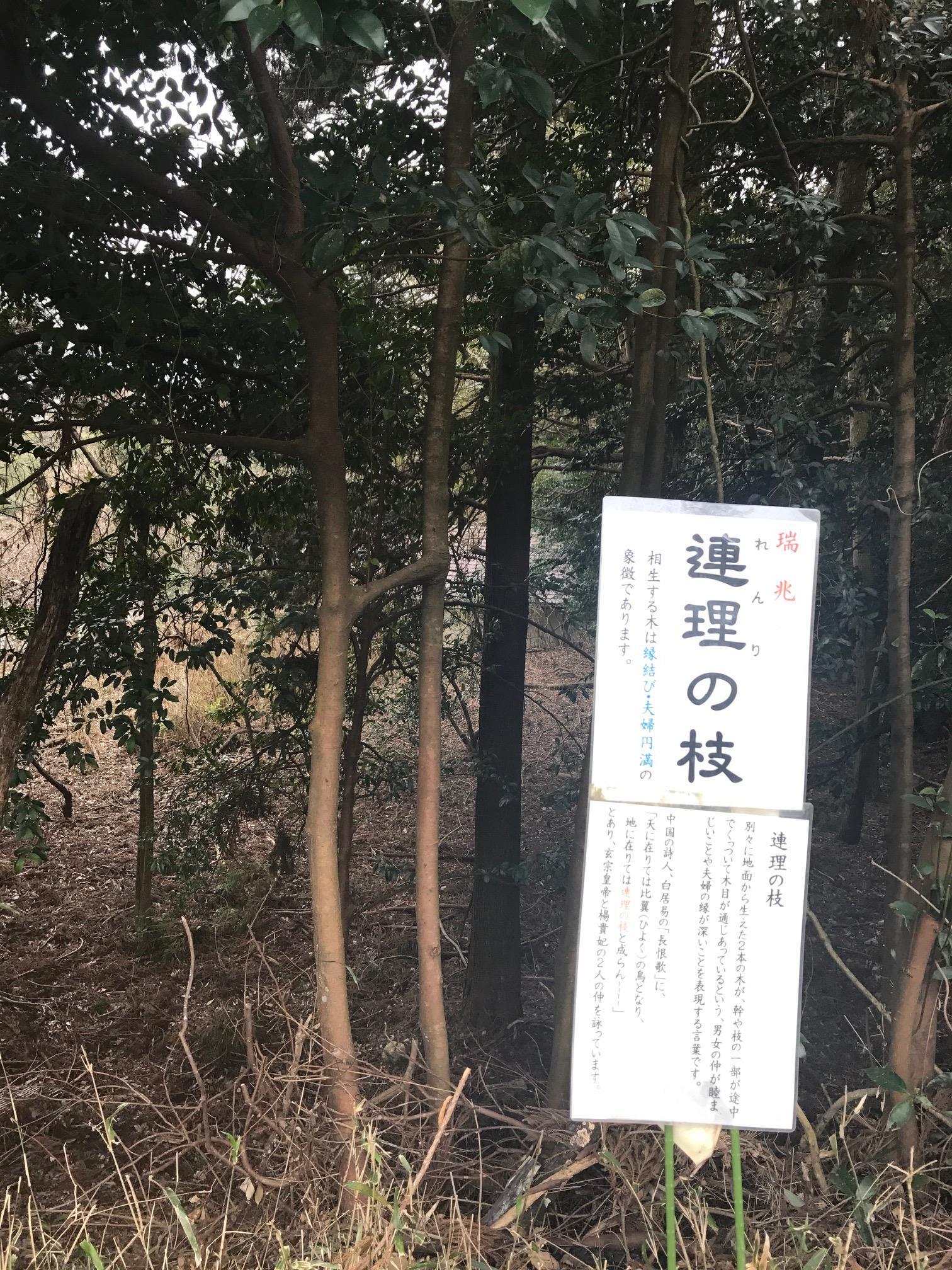http://www.sagawa-artmuseum.or.jp/blog/IMG_1522.JPG