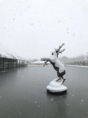 雪の日の蝦夷鹿